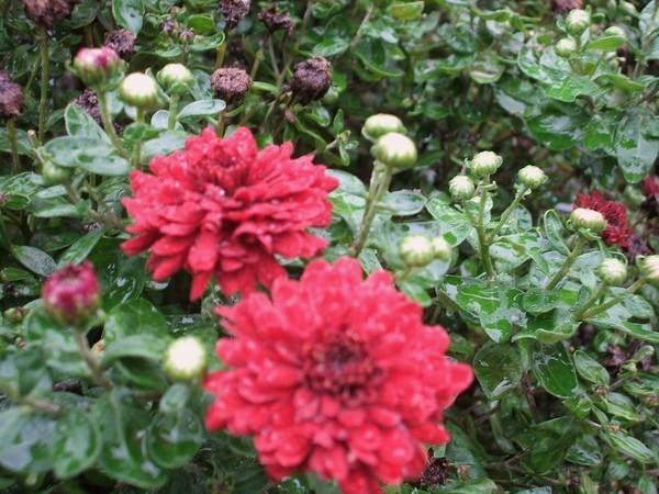 Flowers/ Rain
