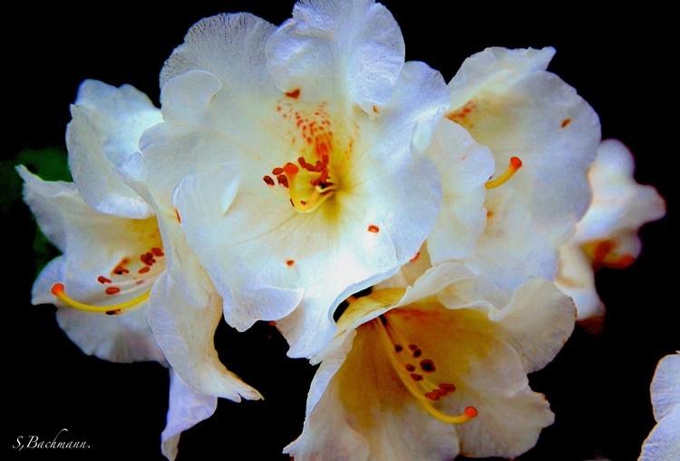 White spring flower.