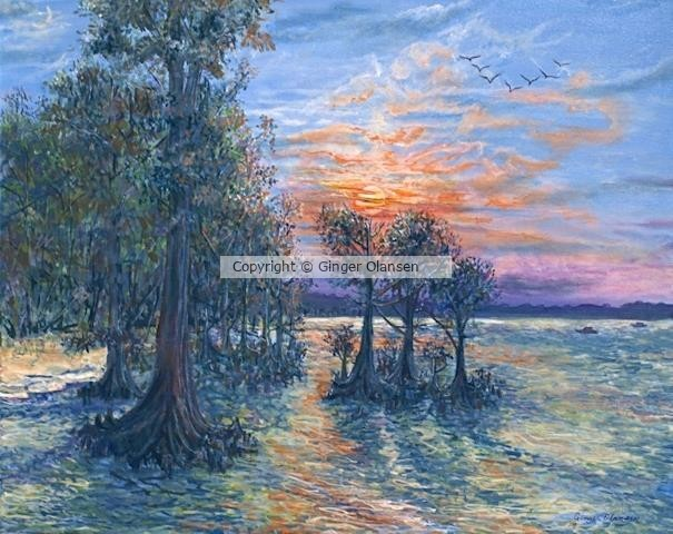 Cypress Tress at Sunset