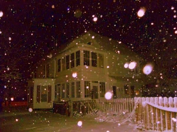 Snowdrops.