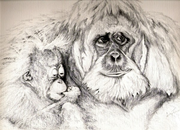 This is my entry for the pencil drawing competition proud mama and is a pencil drawing on canvas paper of an orangutan and her baby i hope you like it