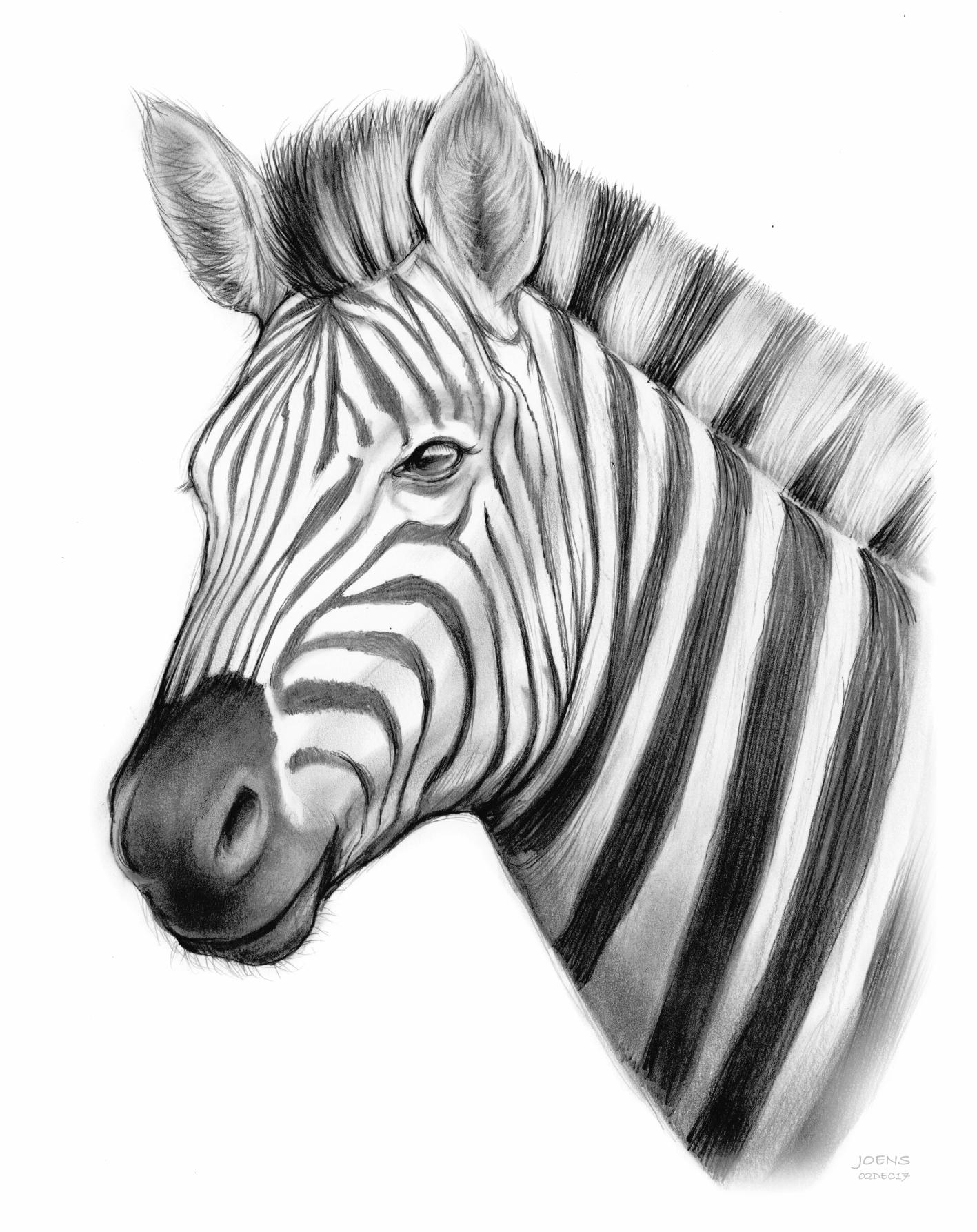 Zebra by Greg Joens | ArtWanted.com